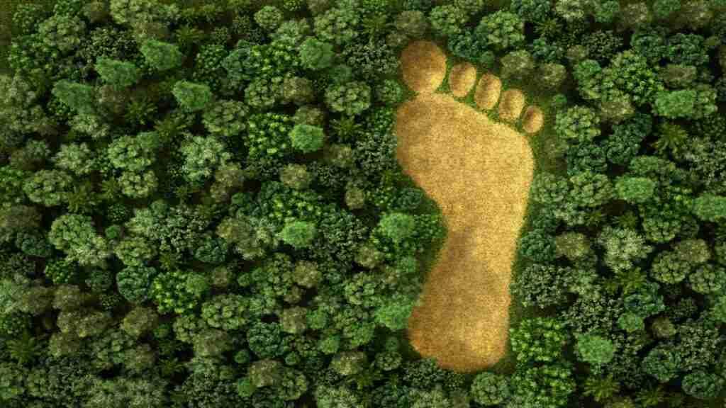 Environmental Awareness Online Course